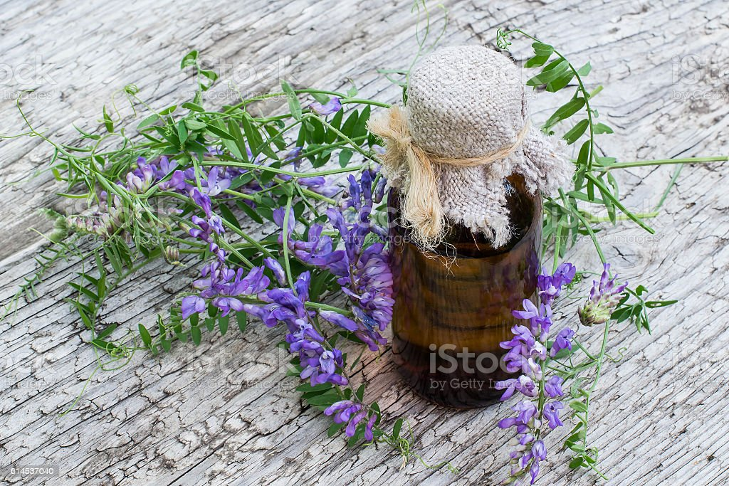 Medicinal plant Vicia cracca and pharmaceutical bottle stock photo