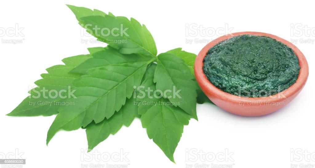 Medicinal Vitex Negundo stock photo