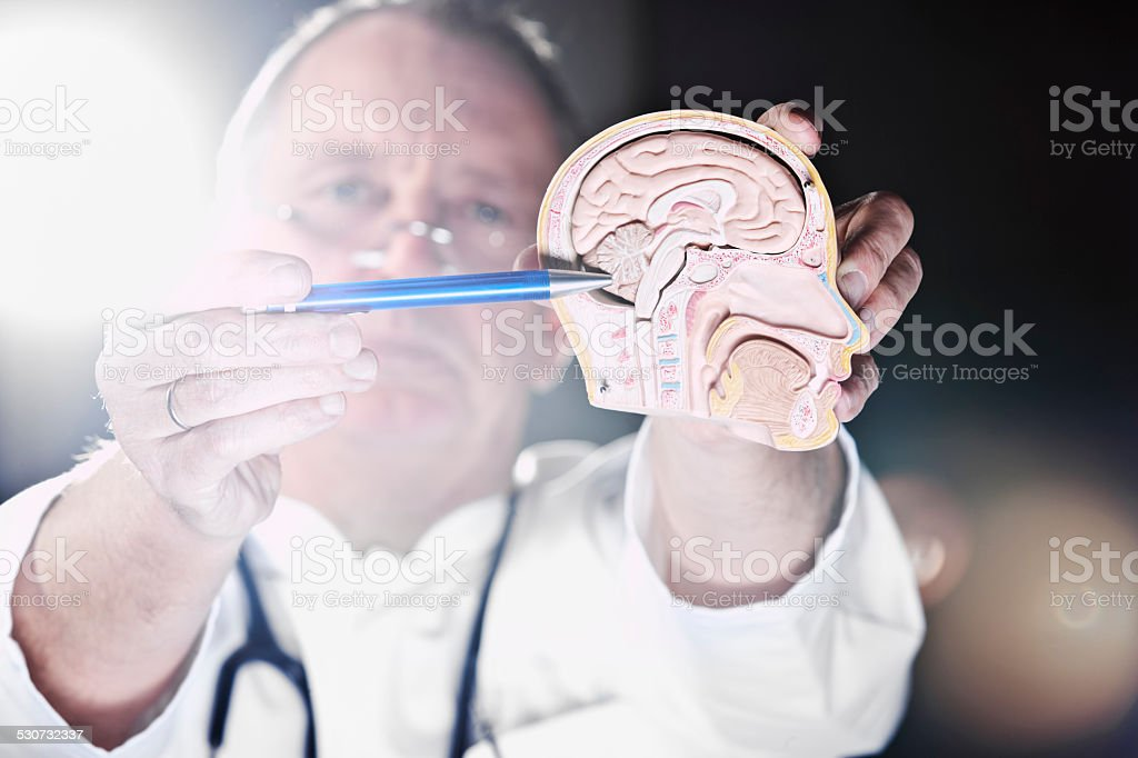 Medicine doctor at cerebellum stock photo