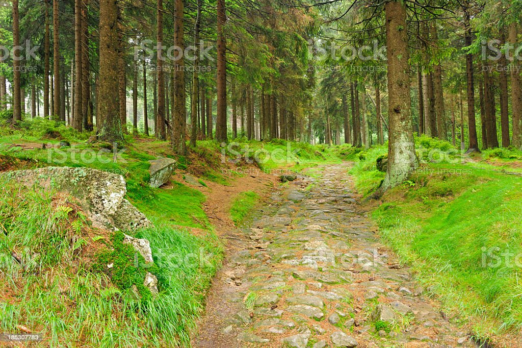 Medieval Cobblestone Road through natural Spruce Tree Forest royalty-free stock photo