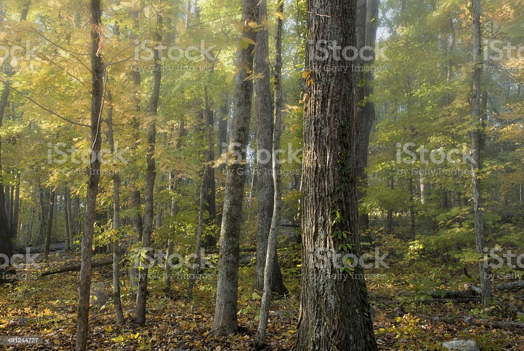 Medieval Forest royalty-free stock photo