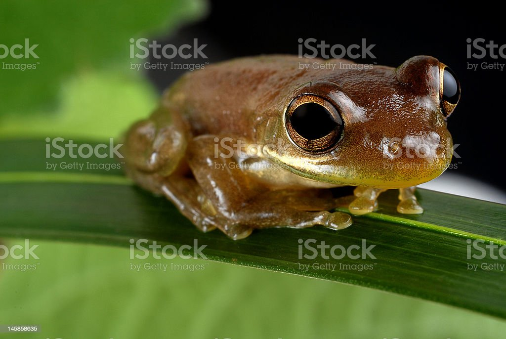 Meditating Toad stock photo