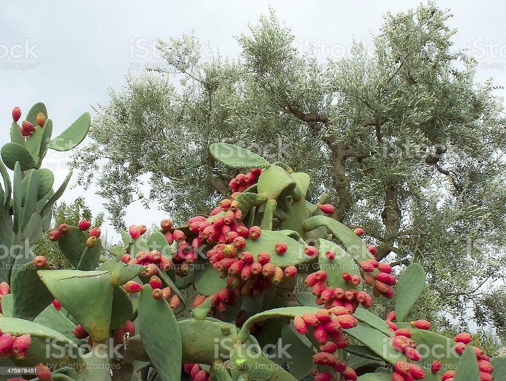 Mediterranean agricultural landscape. stock photo