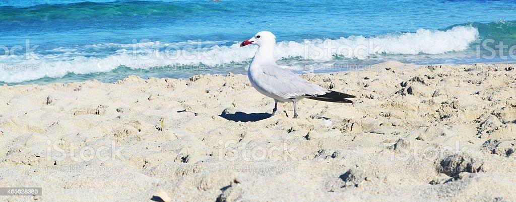Mediterranean beaches. Seabird on the beach stock photo