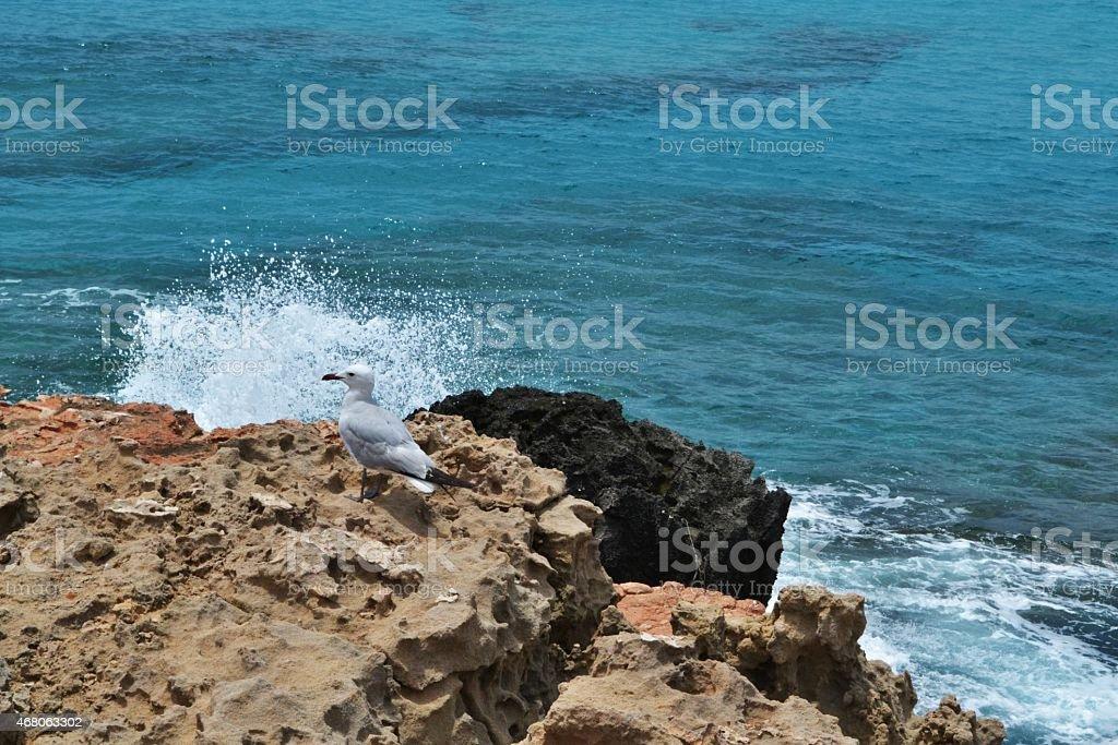 Mediterranean beaches, seabird on the cliff stock photo