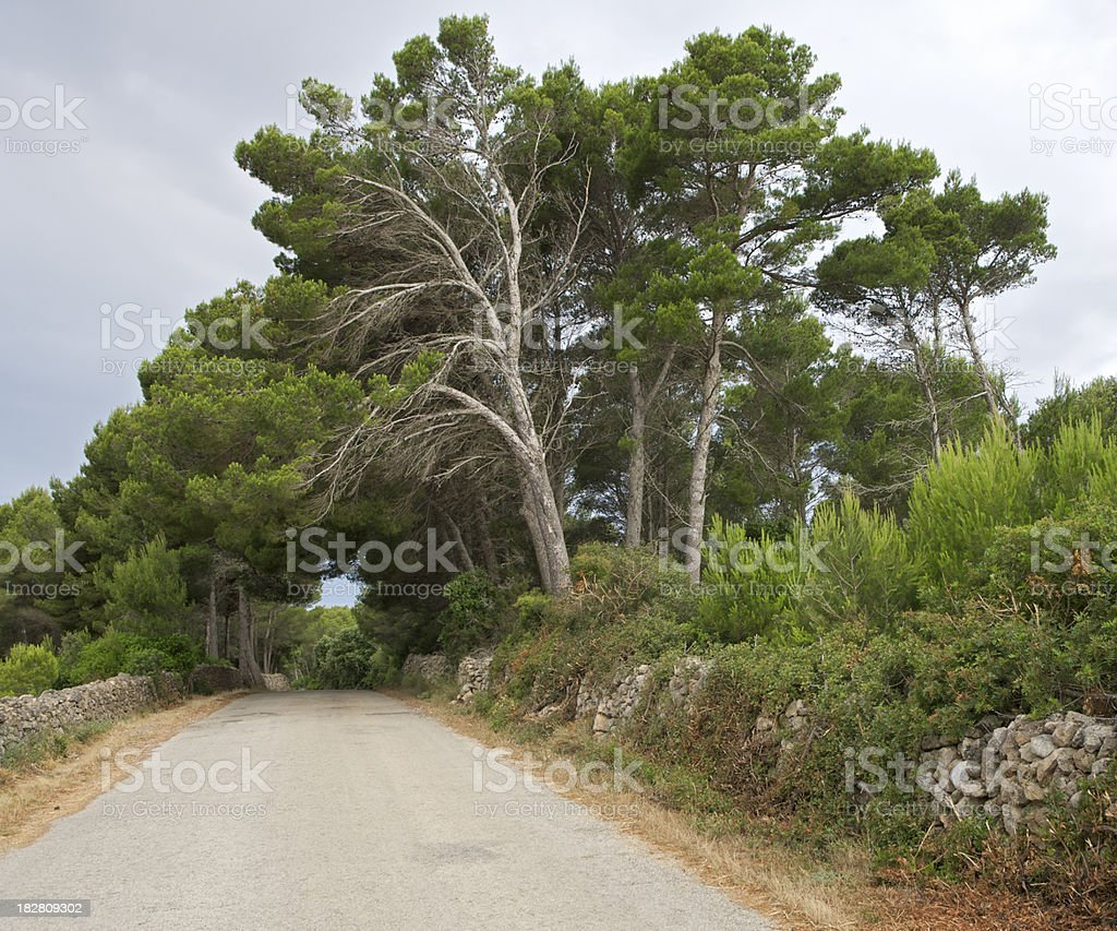Mediterranean Country Road stock photo
