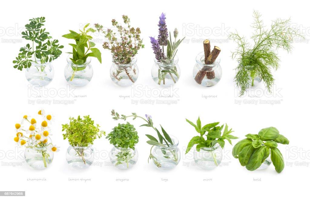 Mediterranean cuisine fresh herbs stock photo