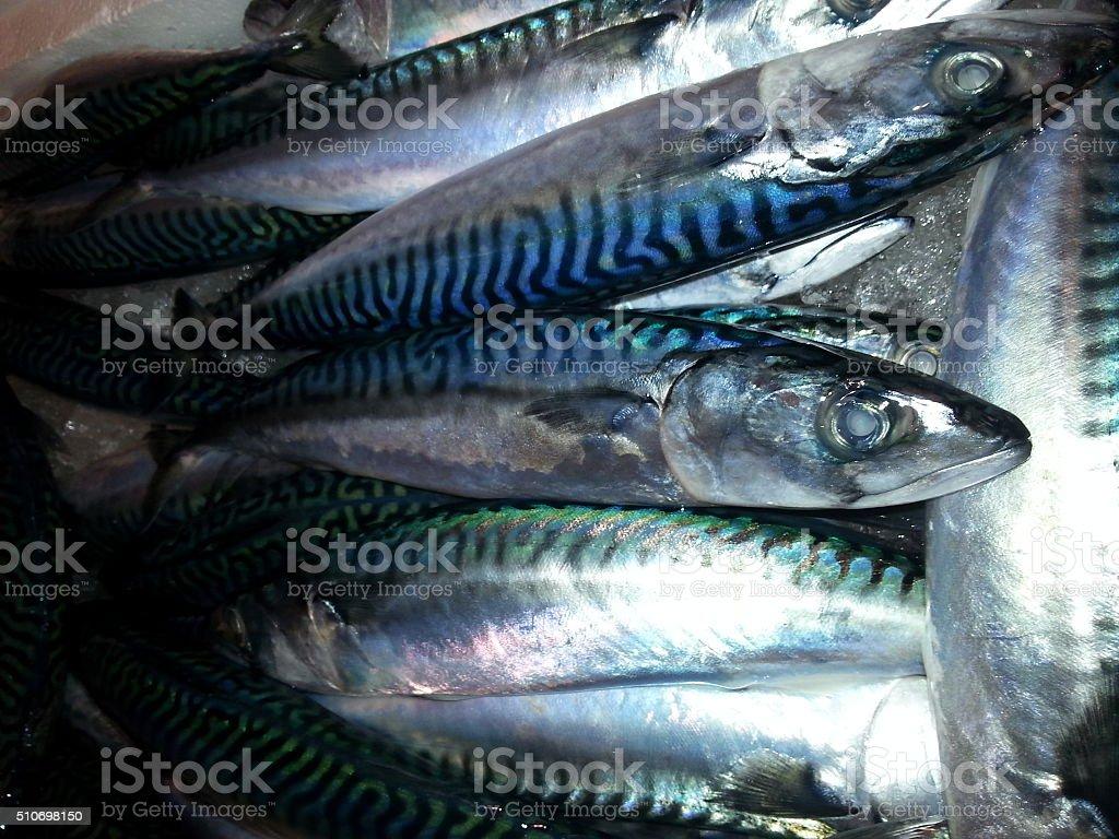 Mediterranean fish. stock photo