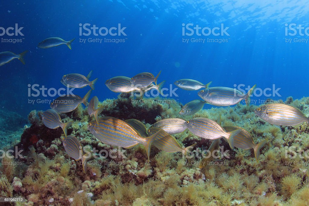 Mediterranean fishes stock photo