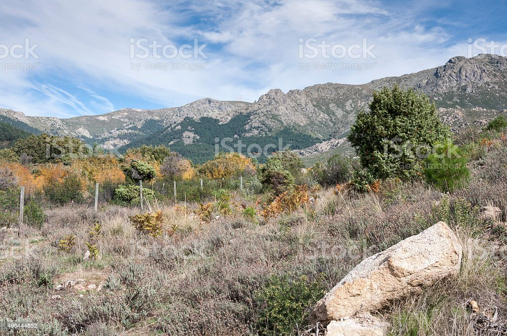Mediterranean forest in La Barranca Valley stock photo