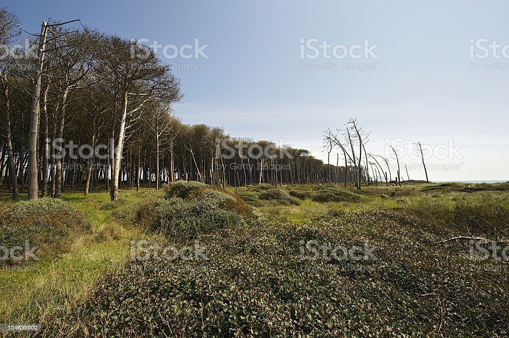 Mediterranean Forest royalty-free stock photo