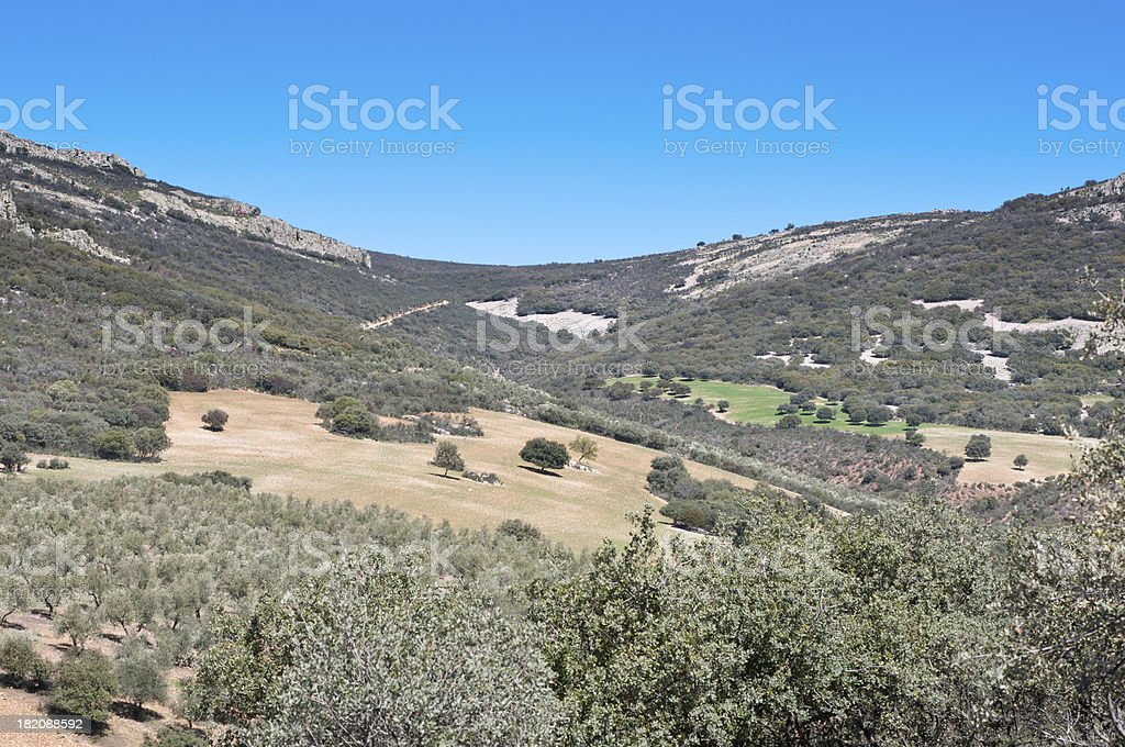 Mediterranean forest royalty-free stock photo