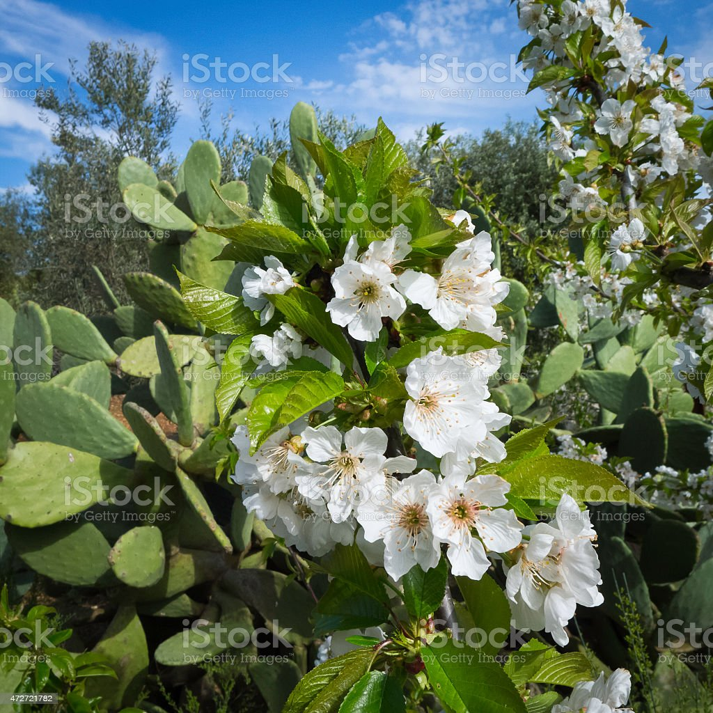 Mediterranean plants at sunset of spring time. stock photo