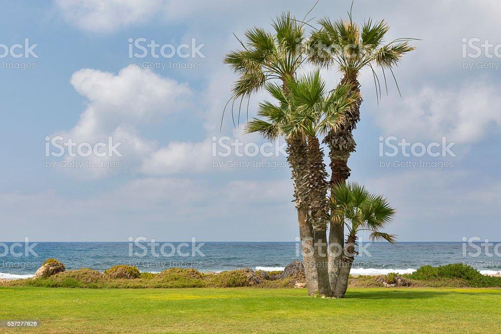 Mediterranean Sea palm beach stock photo