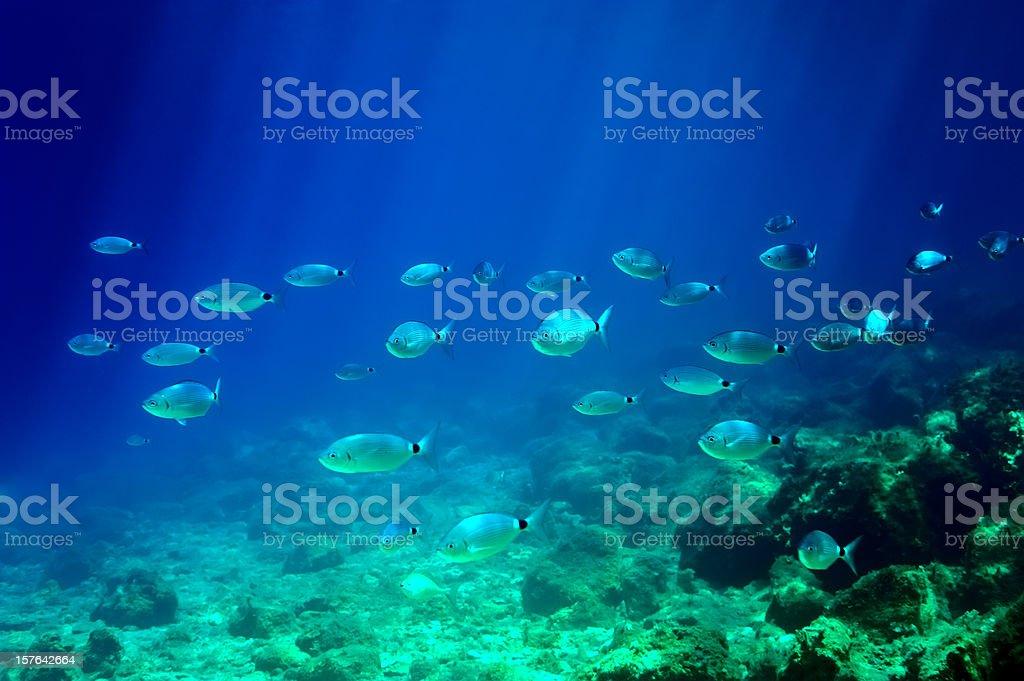 Mediterranean Sea Underwater royalty-free stock photo