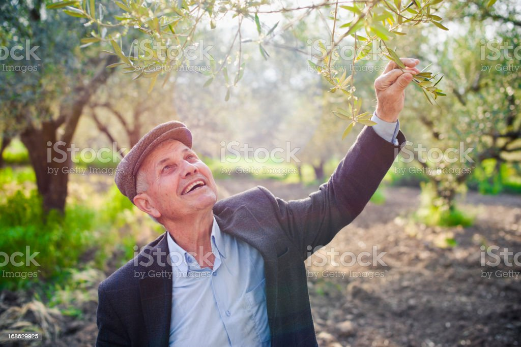A mediterranean senior agriculturist holding a tree branch stock photo