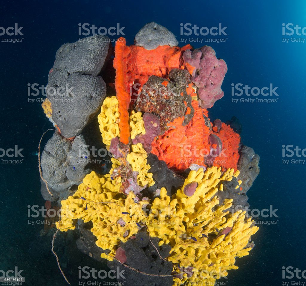Mediterranean Sponge stock photo