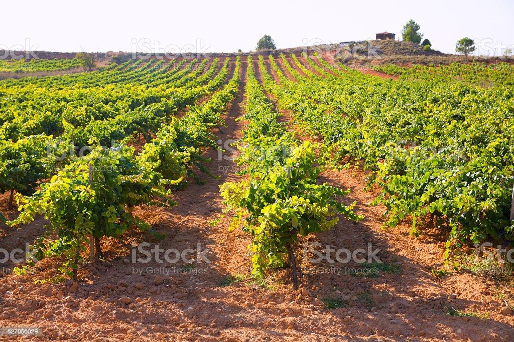 Mediterranean vineyards in Utiel Requena at Spain stock photo