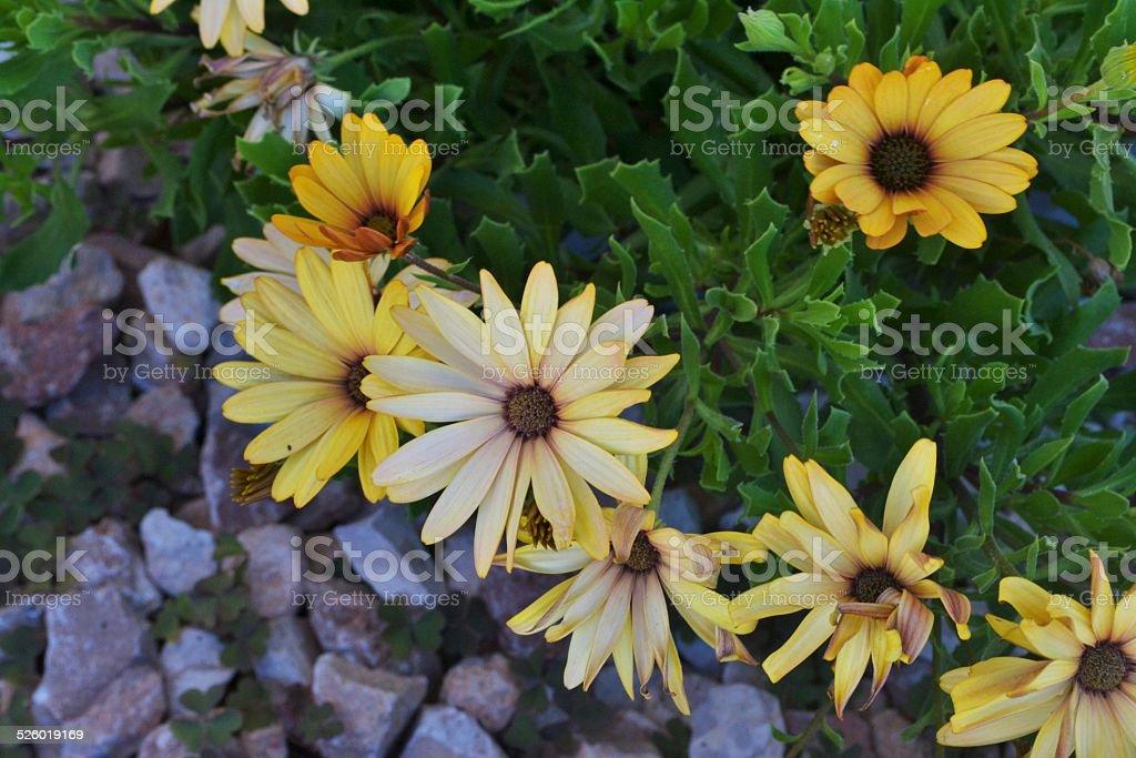 Mediterranean's nature. Flowers stock photo