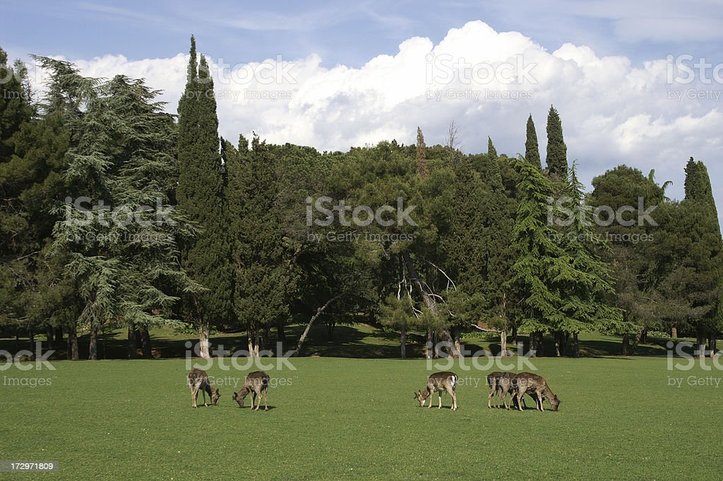 Medium group of deer on pasture royalty-free stock photo