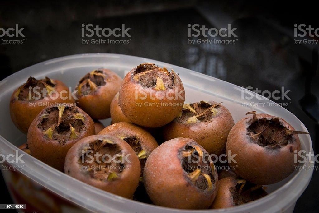 Medlar fruits - Mespilus stock photo