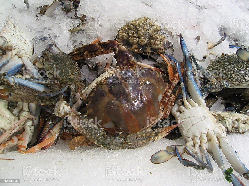 Meeresfrüchte stock photo