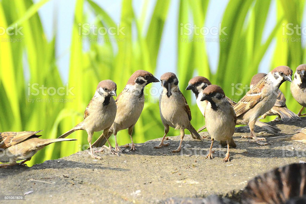 Meeting of the sparrow. royalty-free stock photo