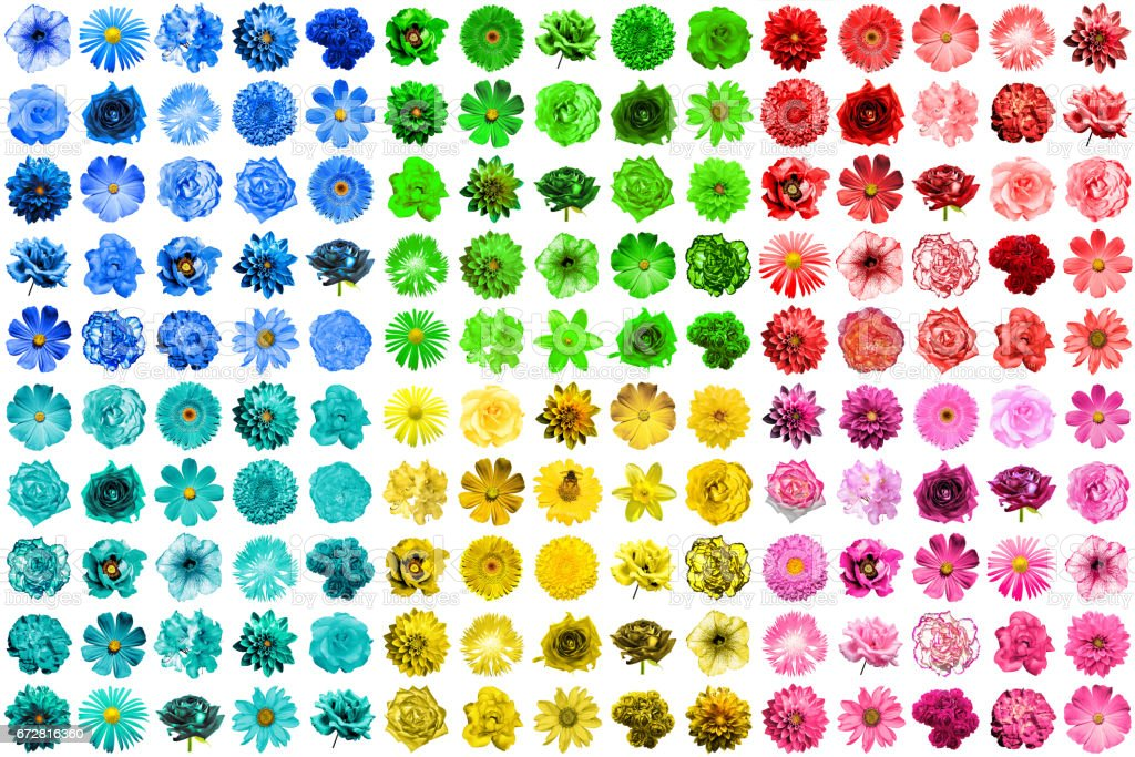 Mega pack of 150 in 1 natural and surreal blue, yellow, red, pink, green and turquoise flowers isolated on white stock photo