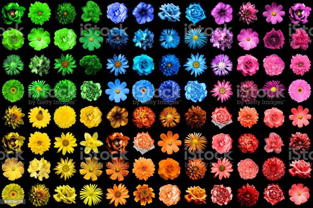 Mega pack of 96 pink flowers isolated on black stock photo