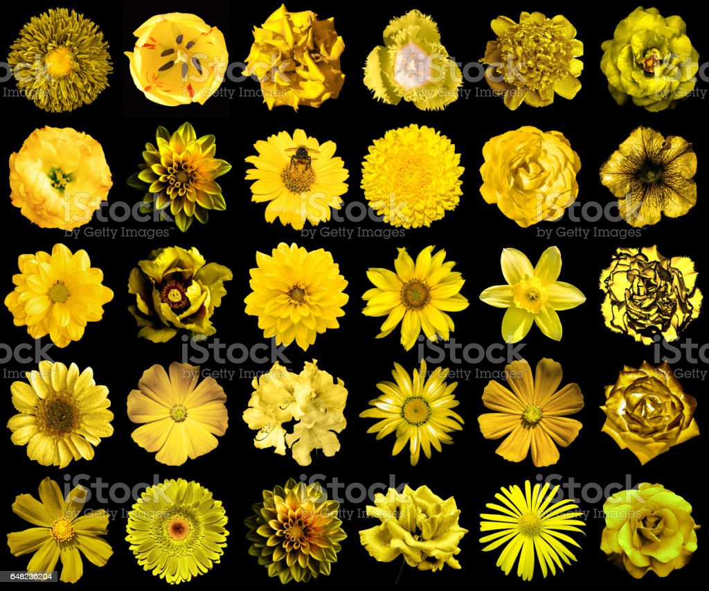 Mega pack of natural and surreal yellow flowers 30 stock photo