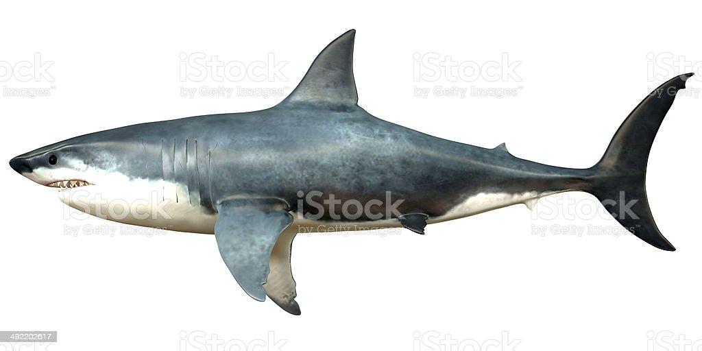 Megalodon Side Profile stock photo
