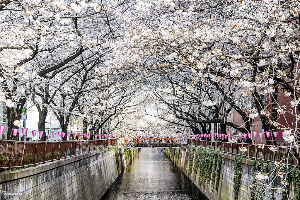 Meguro Canal in Spring stock photo