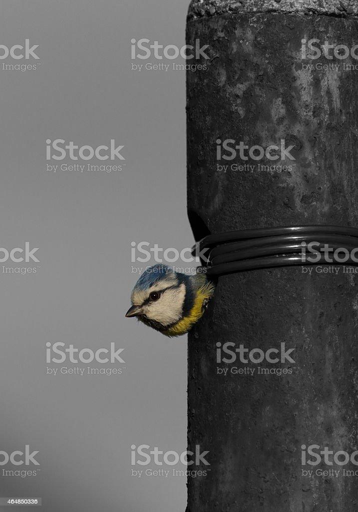 Meise Kopf stock photo
