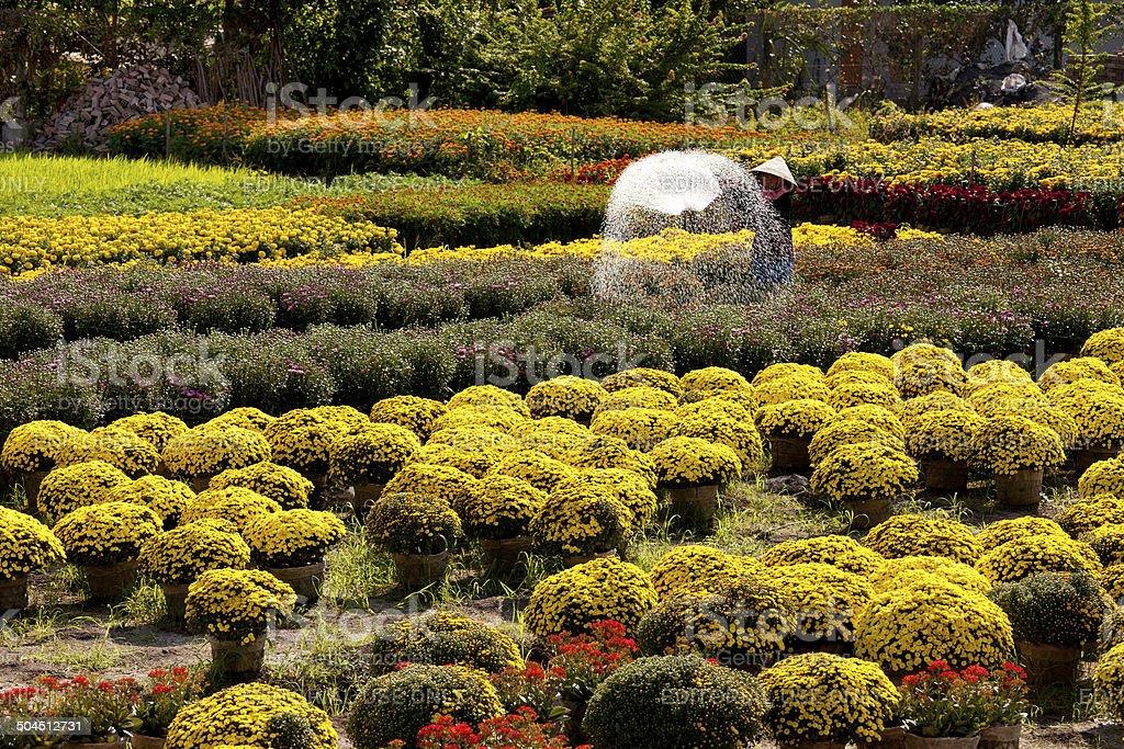 Mekong Delta Flower Farm stock photo