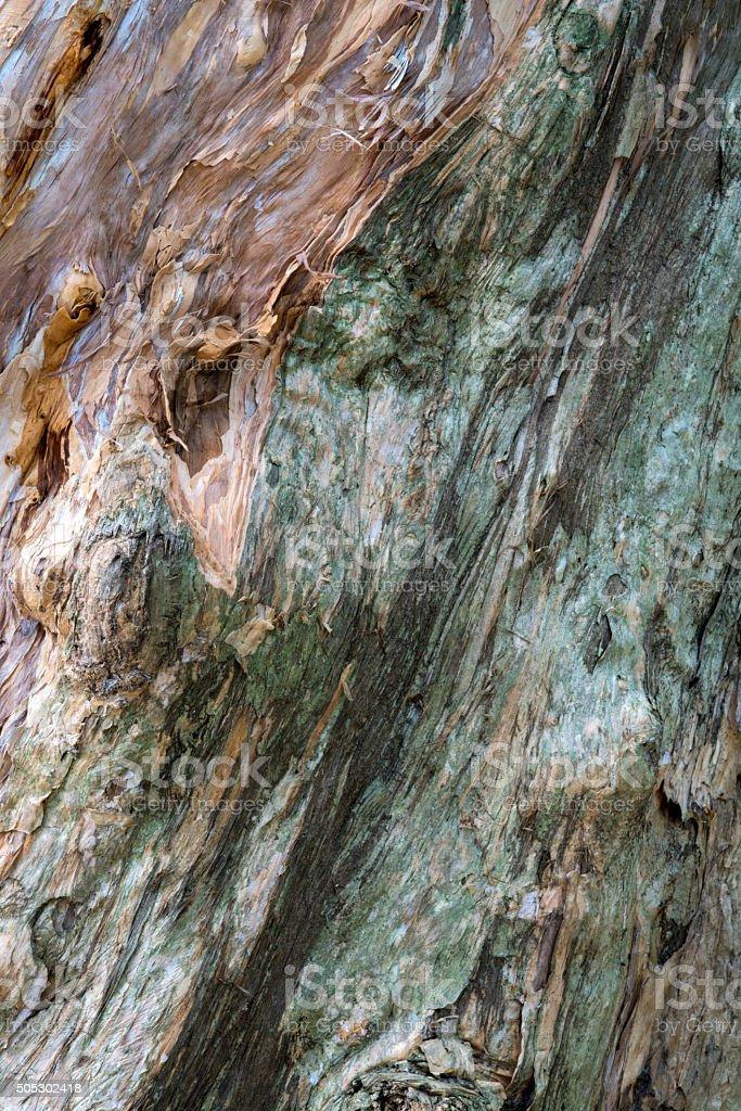 Melaleuca wood bark texture stock photo