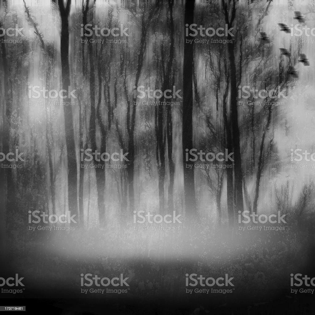 Melancholic misty forest landscape with fog and birds stock photo