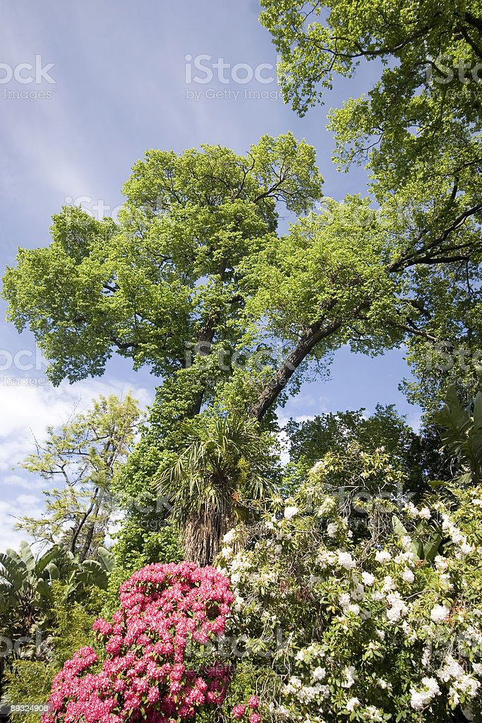 Melbourne Park Trees royalty-free stock photo