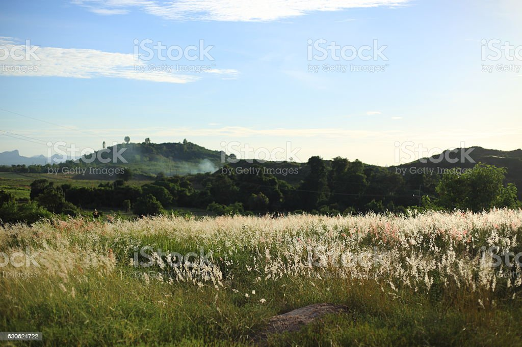 Melinis repens and mountains stock photo