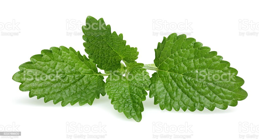 Melissa - Lemon balm stock photo