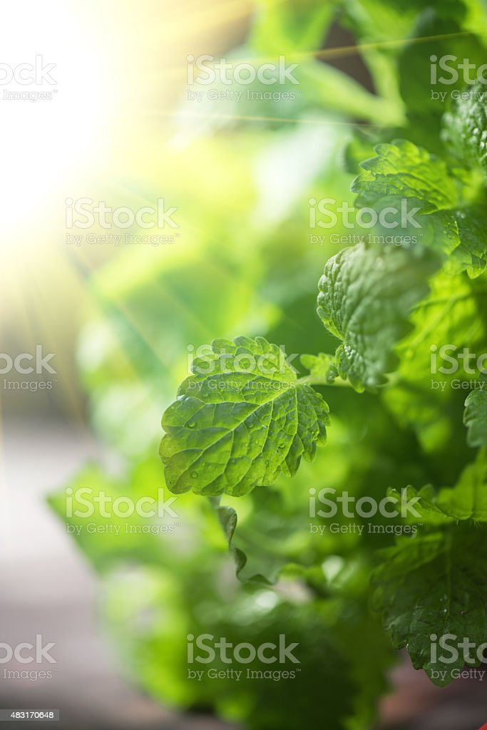 melissa stock photo