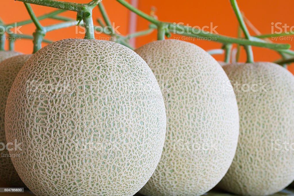 Melon fruits with orange background stock photo