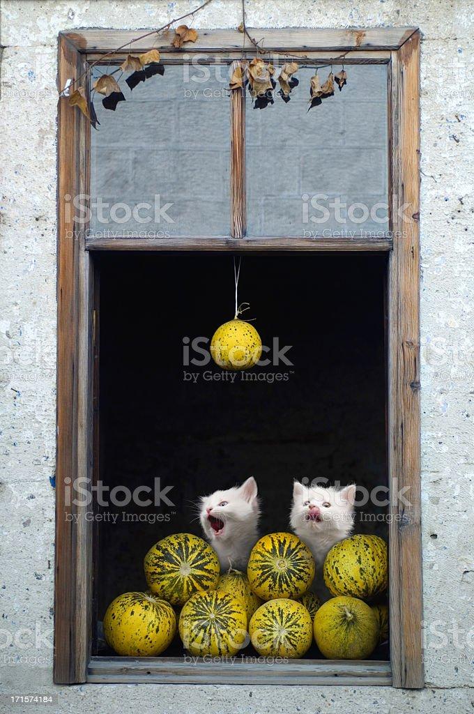 melon market stock photo