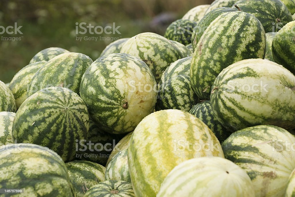 melons royalty-free stock photo