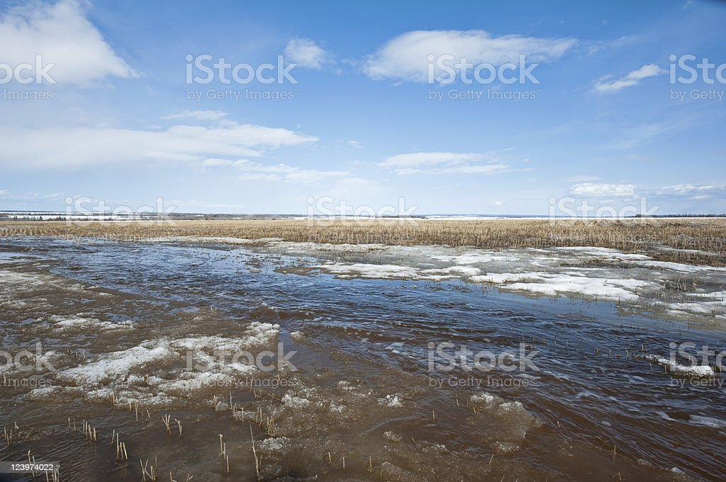 melt water flowing through melting snow  in a grain field royalty-free stock photo