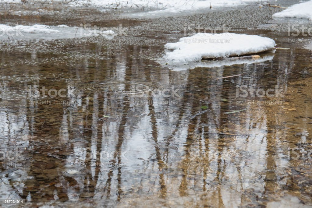 Melt water in forest, reflections and circles on the water. stock photo