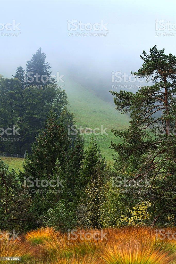 Melting pot of vegetation peat bog in autumn stock photo