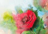 melting rose in watercolor