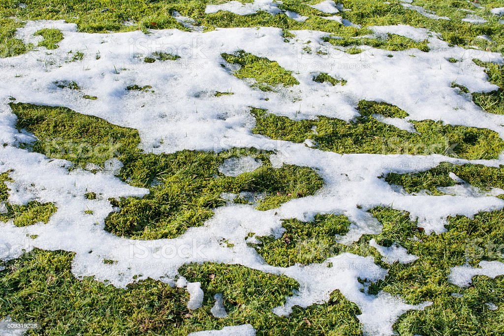 Melting snow and ice reveals the grass stock photo