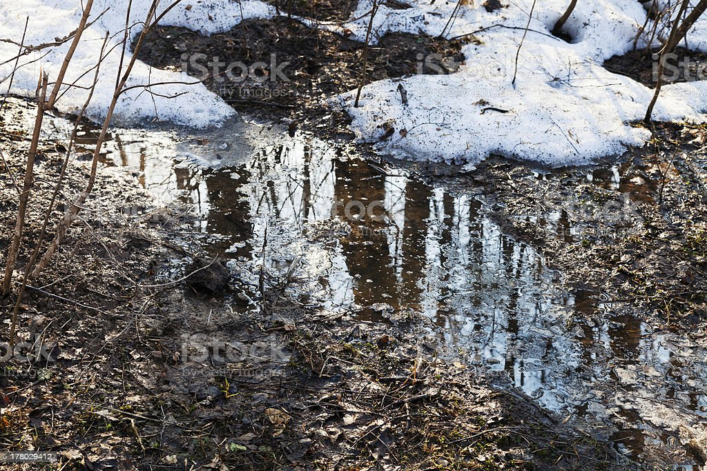 melting snow in forest royalty-free stock photo