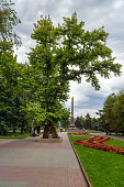 Memorial poplar tree on Square of Fallen Fighters. Volgograd